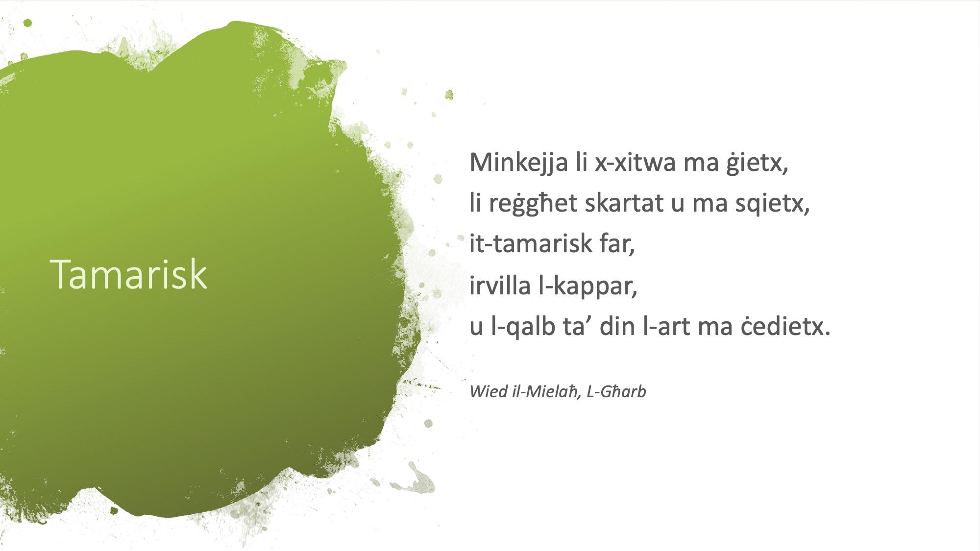 Il-Limerikki tal-Covid-19 - Tamarisk - 2